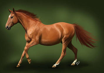 Red Warmblood by equinewoods