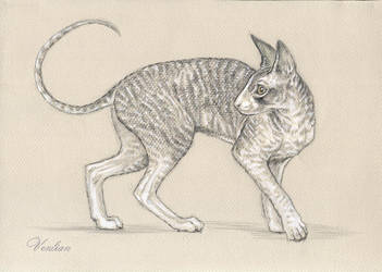 Cornish Rex commission2 by Venlian