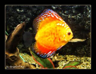 Underwater I by GraphixFreak
