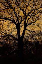A Tree by korrox
