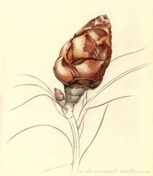 Camellia Bud by Equal-Night
