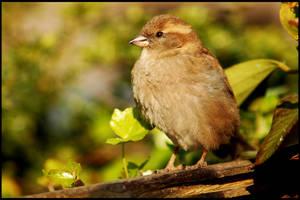 Bird on a Wood by cancerio