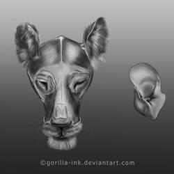 Lion (Structural Anatomy Study) by goRillA-iNK