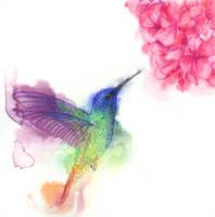 Hummingbird by Hummingbird26