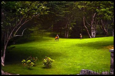 Bambi in Ireland by rTiFelic