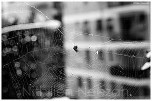 Old web by nithilien