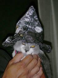 My new kitten Lani by Demona909
