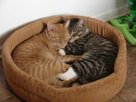 Cat Nap by wondergirl100