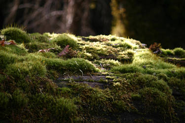 Moss stock 6 by rustymermaid-stock