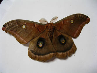 moth stock by rustymermaid-stock