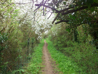 Bridleway to Elsewhere by Davecheesefish