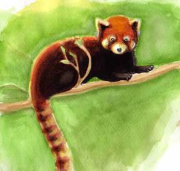 Red Panda by adrenalineyanet