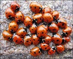 Bugs party by deftoettan