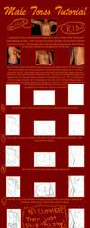 Male Torso Tutorial by kimberly-castello