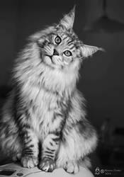 Black-white MCO by krainaczaru