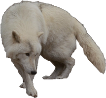 Arctic Wolf Precut by WolfLover10122
