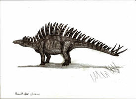 Paranthodon africanus by Teratophoneus