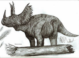 Polyonax mortuarius by Teratophoneus
