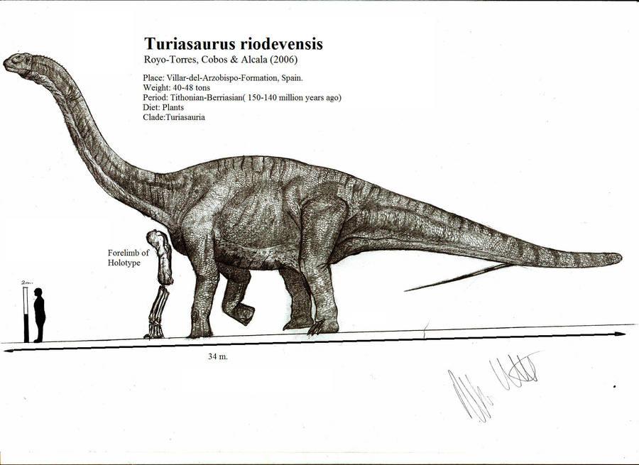 [Image: turiasaurus_riodevensis_by_teratophoneus...llview.jpg]