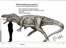 Metriacanthosaurus parkeri by Teratophoneus