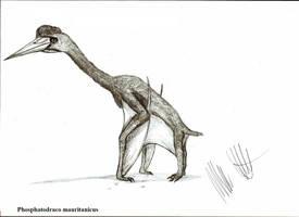 Phosphatodraco mauritanicus by Teratophoneus