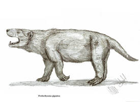 Proborhyaena gigantea by Teratophoneus