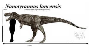 Nanotyrannus lancensis by Teratophoneus