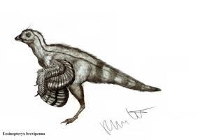 Eosinopteryx brevipenna by Teratophoneus