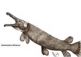 Atractosteus africanus by Teratophoneus