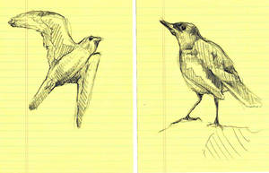 Bird Study I and II by timbroadwater
