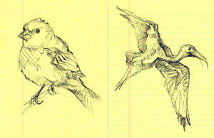 Bird Study III and IV by timbroadwater