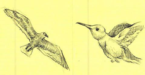 Bird Study IX and X by timbroadwater