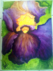wild orchid by nabellamalinka
