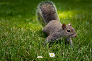 Curious Squirrel (new edit) by Jorgipie