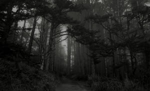 Forest Of Dreams by Jorgipie