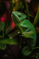 Green Princess by Jorgipie