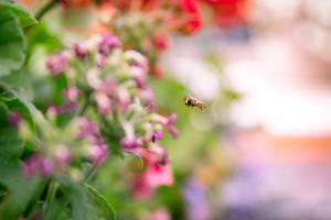 Little Bee Dreams by Jorgipie