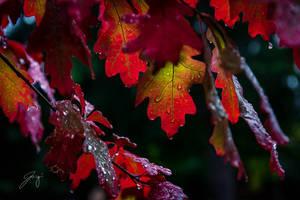The Rain Paints Fall II by Jorgipie