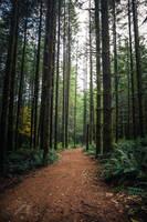 The Forest Calls by Jorgipie