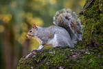 Park Squirrel by Jorgipie
