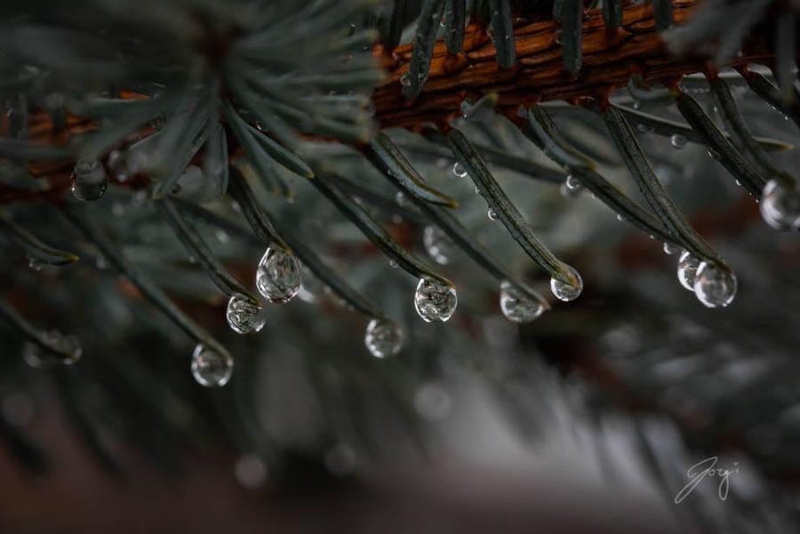 Winter Rain by Jorgipie