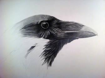 Poe- Work In progress by ThirdTree