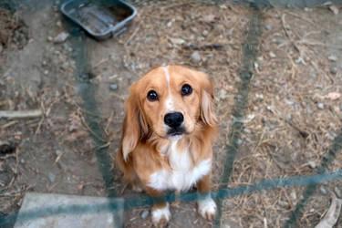 A Beautiful Dog by Photokip