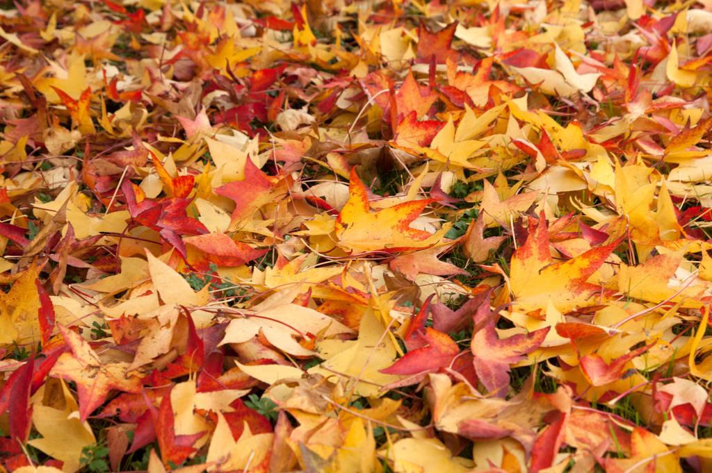 Autumn Leaves Desktop Wallpaper By Photokip On Deviantart