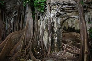 Prison abandonnee en Guadeloupe by louisdemirabert