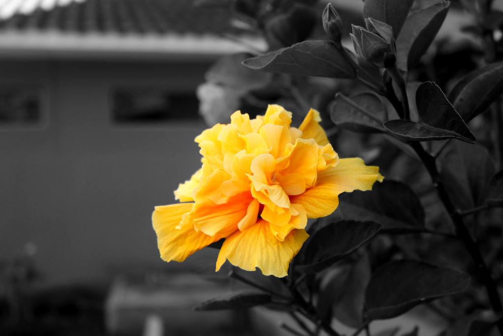 Train Station Flower Colour Splash by clausch99