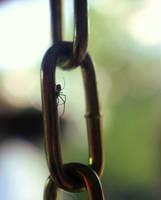 Spider on Chain by clausch99