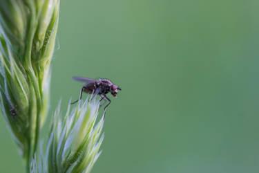 little fly by saliyalein