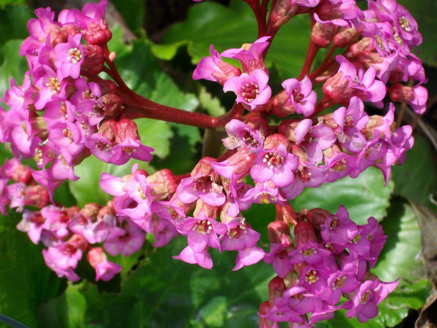Plants Pink Trumpet Flowers By Qrinta On Deviantart