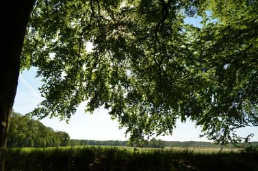tree with back-light 1 by deianira-fraser